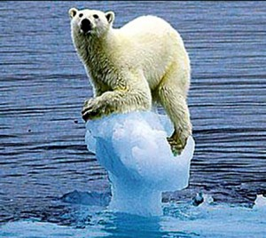 What's one more polar bear? Perhaps a nice oil spill and this beautiful creature of nature could just walk to shore.