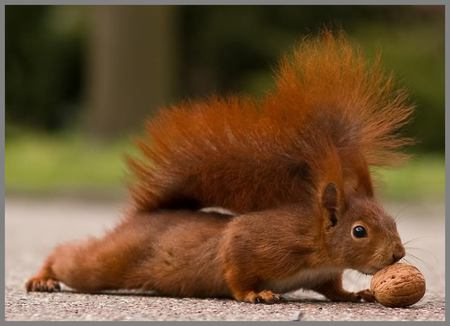 So, You Know Your Nuts? . . . by Joseph G. Evrard, Staff Kentuckian