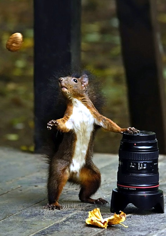 Feeling Just A Little Squirrely…